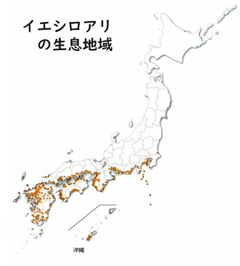 名古屋のシロアリの特徴・・の画像