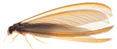 羽アリを見つけたら、シロアリ被害から家を守る1分チェック